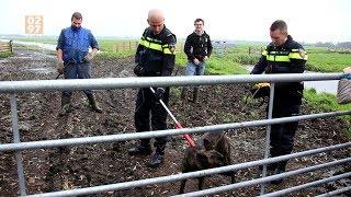 Politie jaagt op herdershond in Kockengen