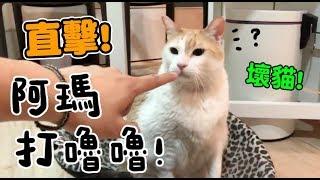 [黃阿瑪的直播]直擊阿瑪打嚕嚕!壞貓!