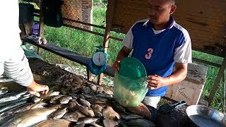 Nikmatnya Ikan Laut Segar di Bengkong Laut Batam