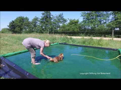 Bauanleitung für einen Pferde- und Hundepool