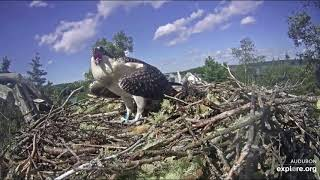 Halley crash lands,something scares her, leaves w/o fish. 8-11-19