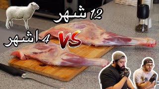 خروف صغير VS خروف كبير | small sheep VS big sheep