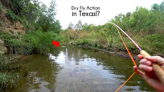 Dry fly fishing in Texas!? - San Antonio Texas Creek Fly Fishing - McFly Angler Episode 72