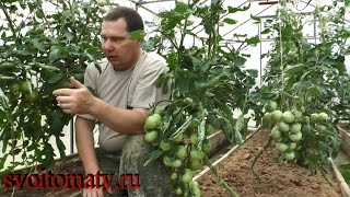 Смотреть онлайн Как ухаживать за разными сортами томатов