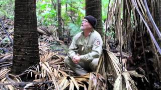 Survival Firelighting in the wet Rainforest