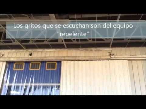 Falso erradicador de palomas