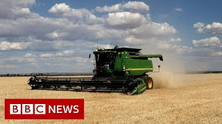 Australia launches WTO appeal against China's barley tariff - BBC News