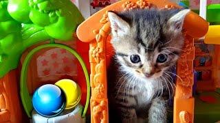 Маленькие котята напали на Алис! Кот Макс играет с котятами💗 Смешные кошки и коты Смешные котята 💝
