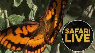safariLIVE - Sunrise Safari - May, 20. 2018   Kholo.pk