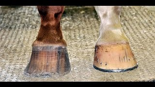 Hoof Care For Beginners