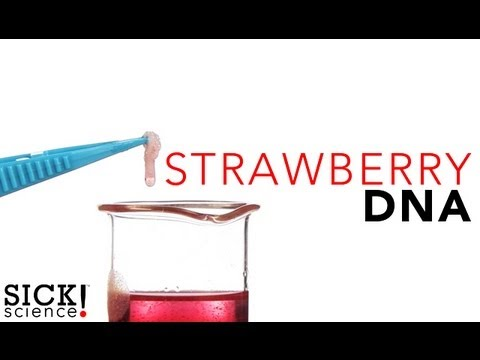 STRAWBERRY DNA EXTRACTION: SICK SCIENCE EXPERIMENT | Keep ...