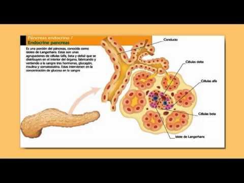 Indicatorii de zahăr din sânge pe stomacul gol nu este