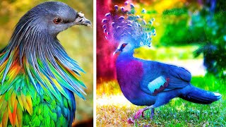 The MOST BEAUTIFUL BIRDS In The World 🦚 🦜🦢