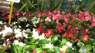 preview picture of video 'Vallromanes Verd, S.L. Centro de Jardinería HD'