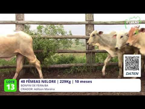 40 FÊMEAS NELORE - BONFIM DE FEIRA-BA