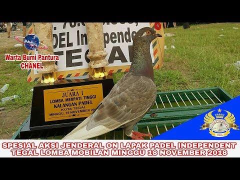 Download 41+  Gambar Burung Merpati Jendral HD Paling Unik