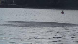 波止際のイワシ群れこれを追って太刀魚、カマス、青物魚が回遊しています