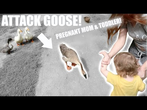 GOOSE ATTACKS PREGNANT WOMAN! + CRAMPING DURING PREGNANCY UPDATE & LABOR & DELIVERY VLOG?