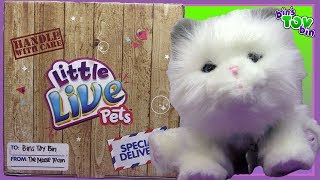 Little Live Pets CUDDLES MY DREAM KITTEN Unboxing By Bin's Toy Bin
