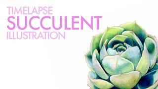 Botanical Illustration: Timelapse Succulent