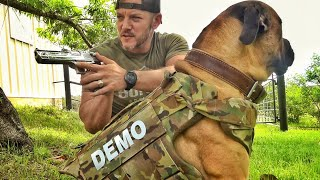 I Got Body Armor for my Dog.... And I'm Gonna Test it...