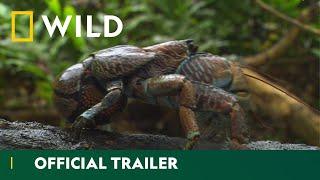 Equator's Wild Secrets Trailer