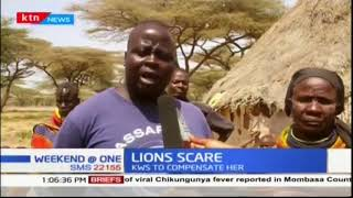 Livestock farmer in Isiolo loses 18 goats after a pride of lions invaded her home