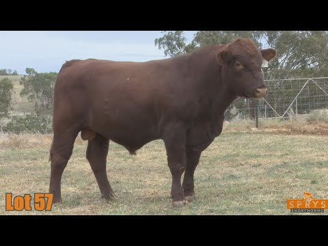 OUTBACK SPRYS INDEX Q265