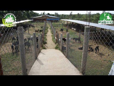 Goat Farming, Goat Commercial Training - смотреть онлайн на