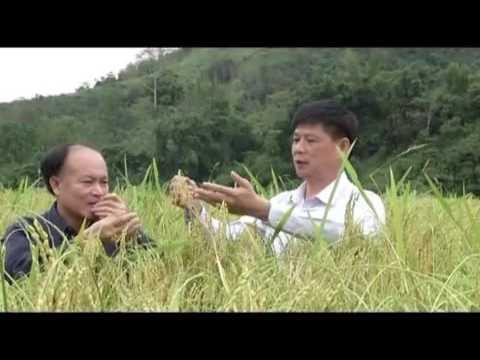 25 2 CM KHOA HOC CONG NGHE 11p