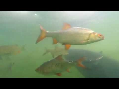 La pesca in Norvegia da Minsk