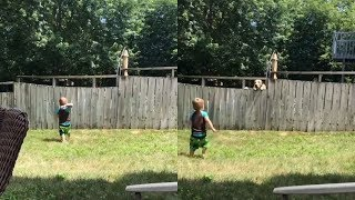 Adorable boy and neighbor dog play fetch over fence