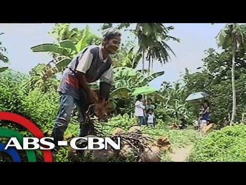 [ABS-CBN]  TV Patrol: Bulag na lolo na 3 dekada nang nagtatrabaho sa koprahan, kilalanin