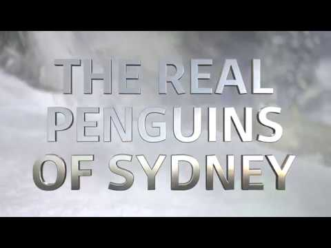 Featuring Comedic Voice Over Artists Mike Goldman And Bianca Zouppas Go On The Production Journey From Stepping Onto Ice With Penguins To Jumping