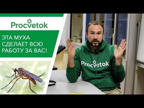 ГЕНИАЛЬНЫЙ способ борьбы с насекомыми-вредителями