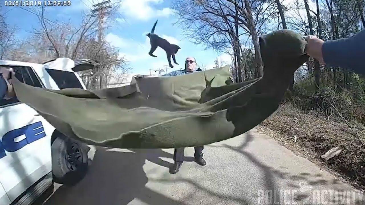 Полицейские спасают котенка