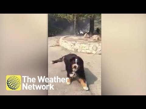 Moment man finds out family dog survived fire