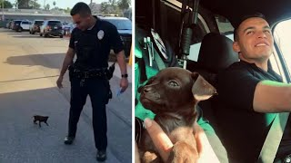 Tiny Pup Joins K-9 Unit After Two Officers Save Him While On Patrol