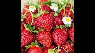 KILIMO BORA: Uboreshaji wa kilimo cha strawberry na gharama zake | Sehemu ya Pili