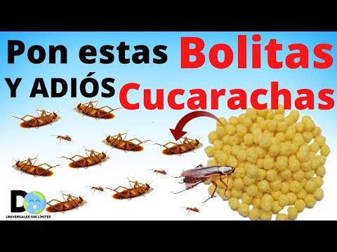 Pon Esto En Cualquier Rincón De Tu Casa  y  Las CUCARACHAS serán eliminadas   Insecticida Casero