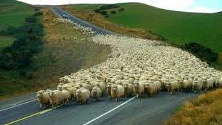 США 3112: Новая Зеландия - иммиграция, работа, учеба, люди, жизнь - SiliconValleyVoice
