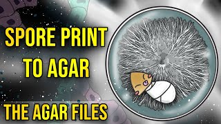 The Agar Files - Spore Print to Agar (Intro to Agar)