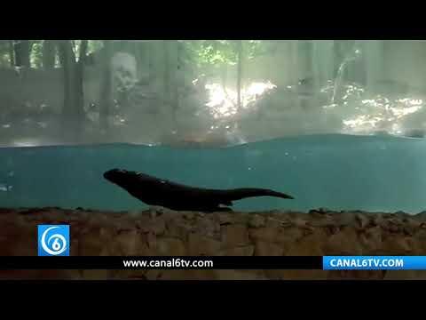 Muere la última nutria del zoológico Zoomat en Chiapas