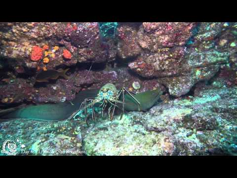 Diving Revillagigero Socorro - Part II , Socorro Islands,Mexiko