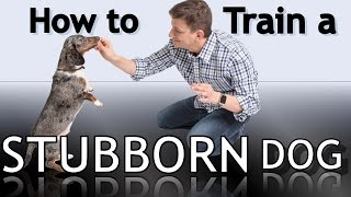 How To Train a Stubborn Dog