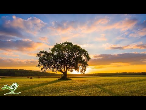 Relaxing Music & Bird Sounds - Calm Piano Music, Sleep Music, Peaceful Music