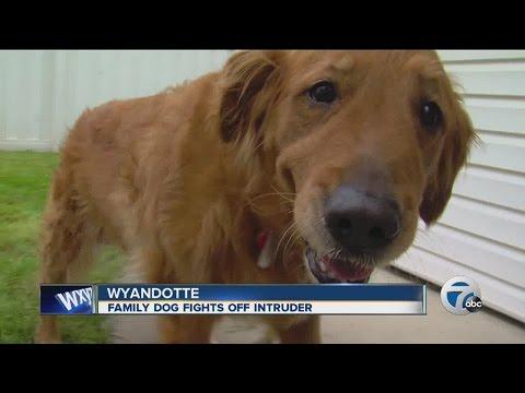 Family dog fights off intruder