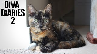 A Month with a New Kitten - The Diva Diaries.