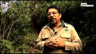El libro rojo, Especies amenazadas - Tapir, el jardinero de la selva