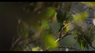 Thumbnail for Reserva: The Youth Land Trust | WINNER, UN Global Youth Video Competition 2019